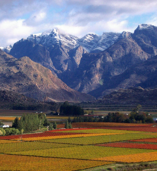 Cape Winelands Tour - Full Day