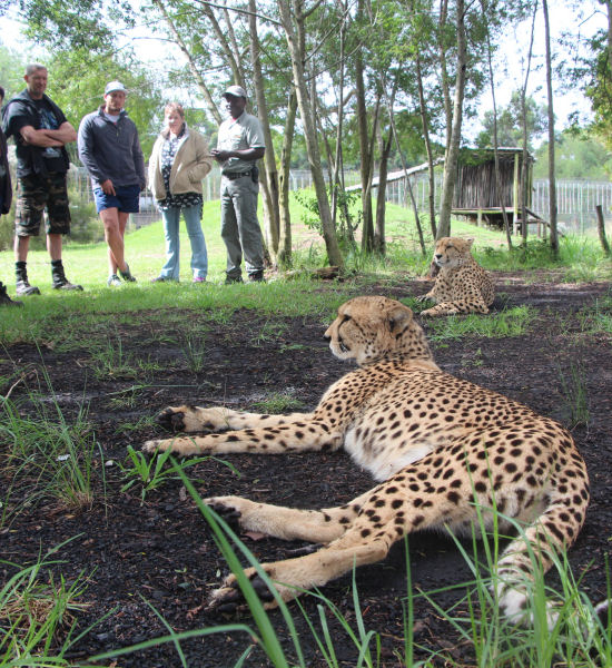 Animal Lover's Tour – Half Day