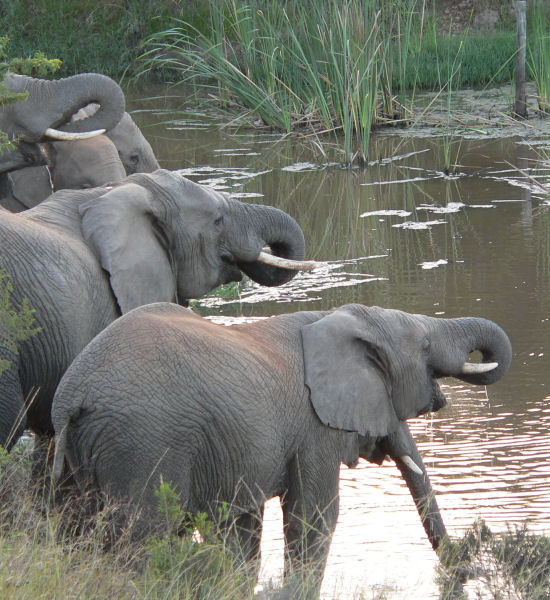 Garden Route and Safari Tour 7 days